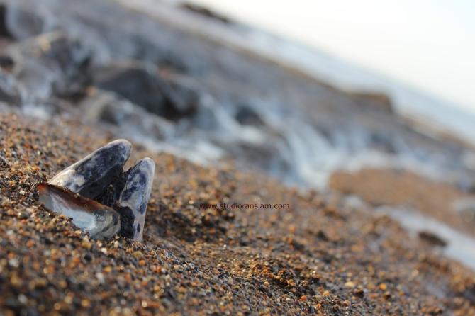 Beach Mussels