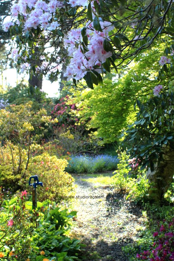 Rhododendron w Spigot