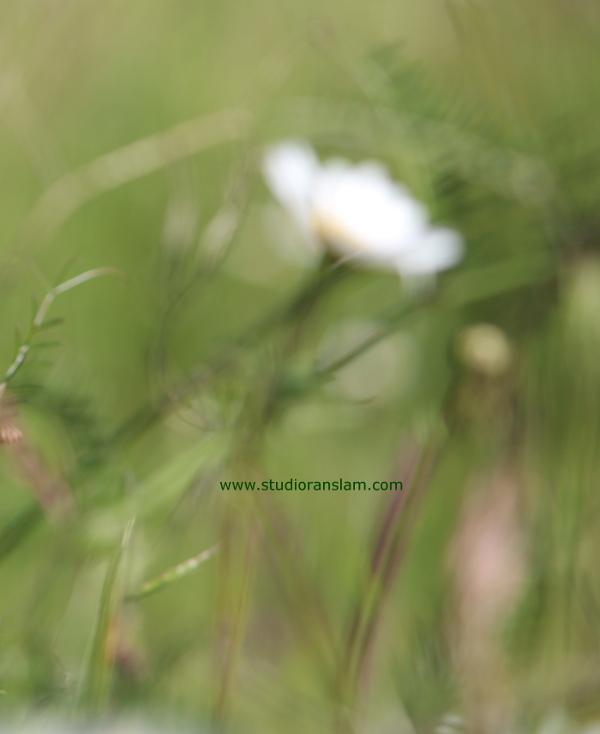 Field of Blur