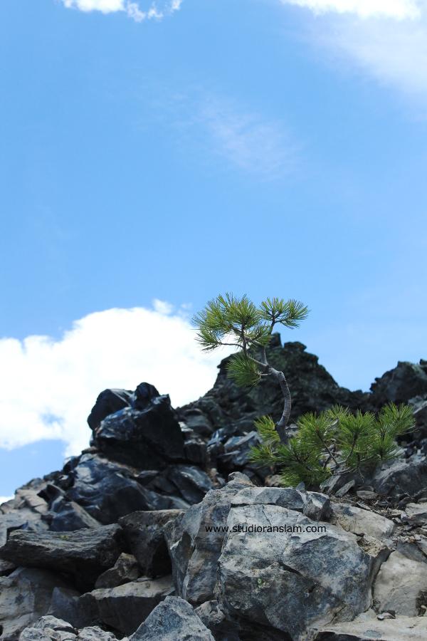 Bonsai Born of Obsidian (2)