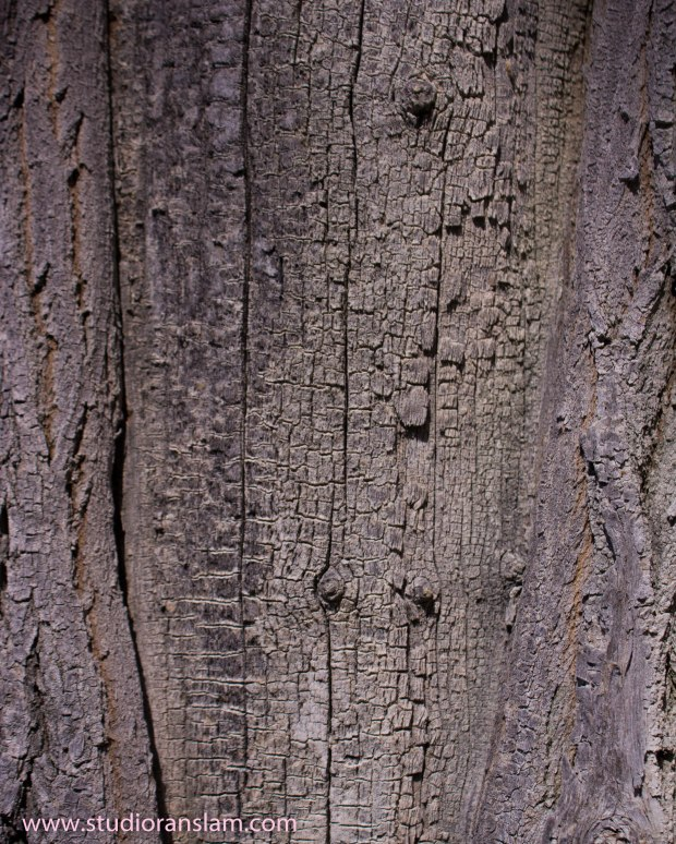 Cottonwood Bark 2
