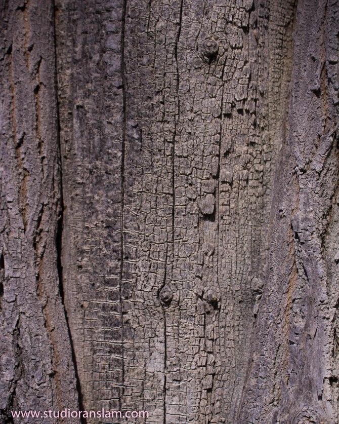 Cottonwood Bark 2