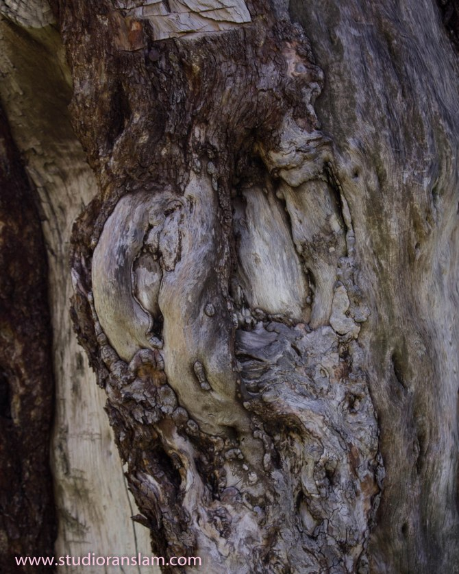 Cottonwood Knot