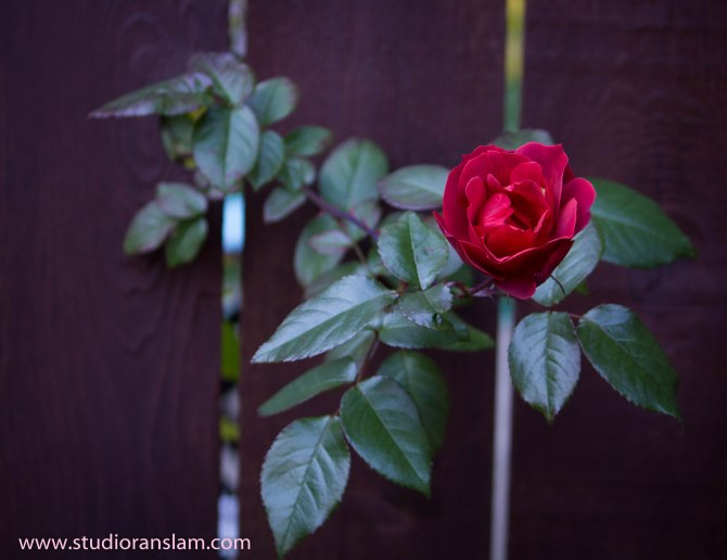 Do What You Need To Bloom (2)