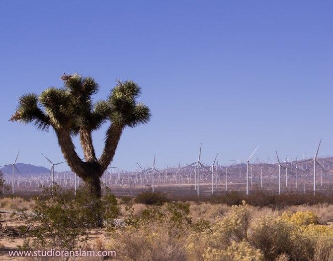 Farming Mojave Style 2