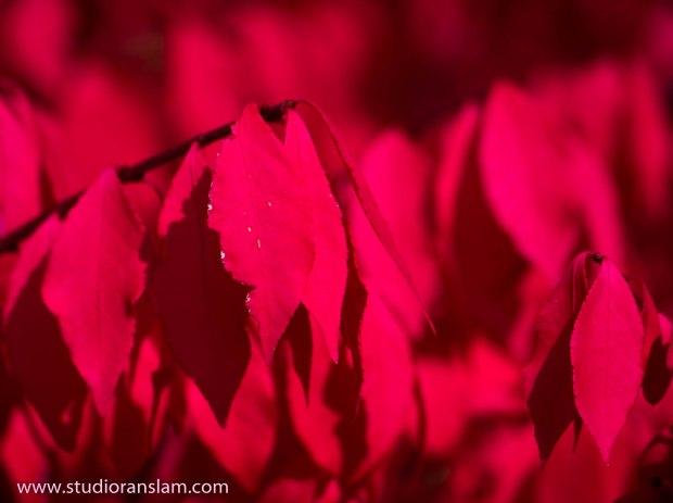 Leaf Flames